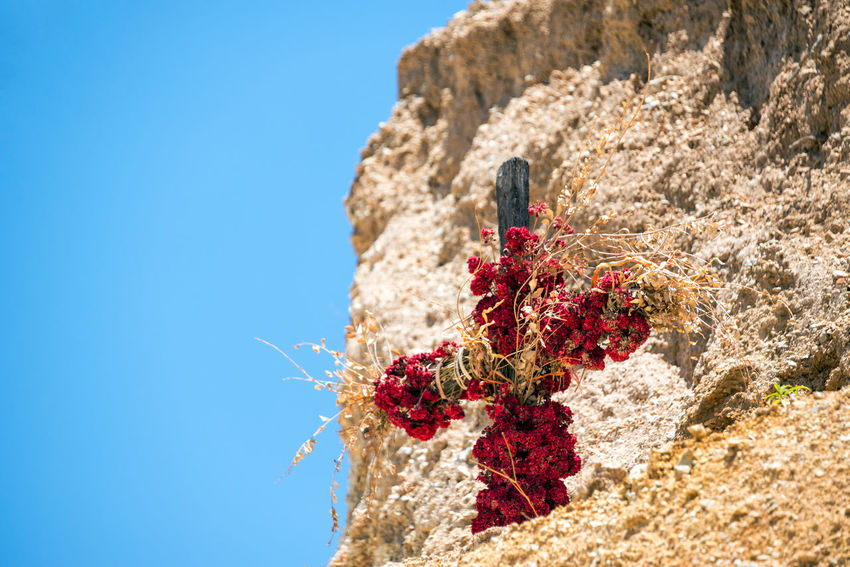 Cross covered in flowers inside of Colca Canyon in Peru Altitude Andes Arequipa Beauty Canyon Colca  Colca Canyon Cross Deep Deepest High Hiking Landscape Mountains Nature Outdoors Peru Range Religion Sky Tourism Travel Valley View Wild