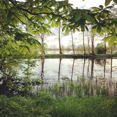 Water Nature Tree Green Color Growth Beauty In Nature Lake Reflection No People Outdoors Day Tranquility Plant Scenics Sky Grass Greenhouse Freshness