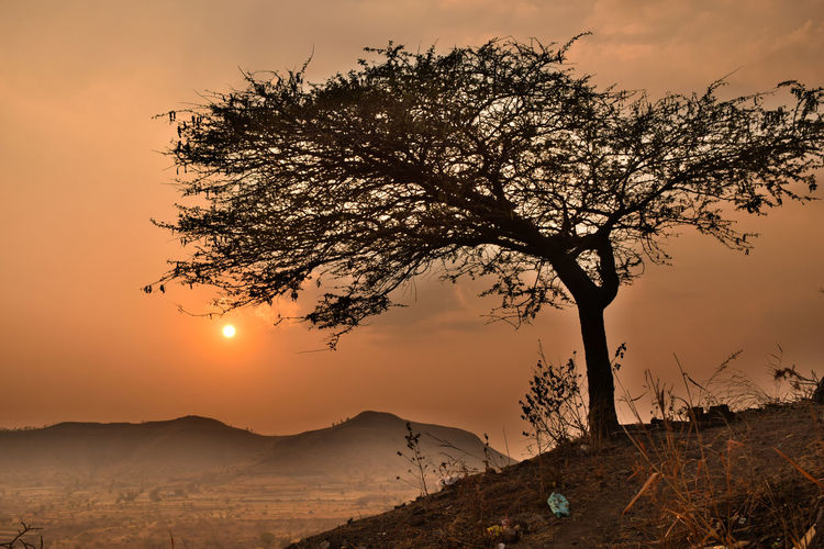 Wallpaper Desktop Wallpaper Sunset Silhouettes Sunset Dusk Dawn HDR Tree Tree Covered In Spider Web Spider Web Web Landscape Tree Mountain Sunset Tree Area Rural Scene Silhouette Photograph Sky Landscape Single Tree The Art Of Street Photography