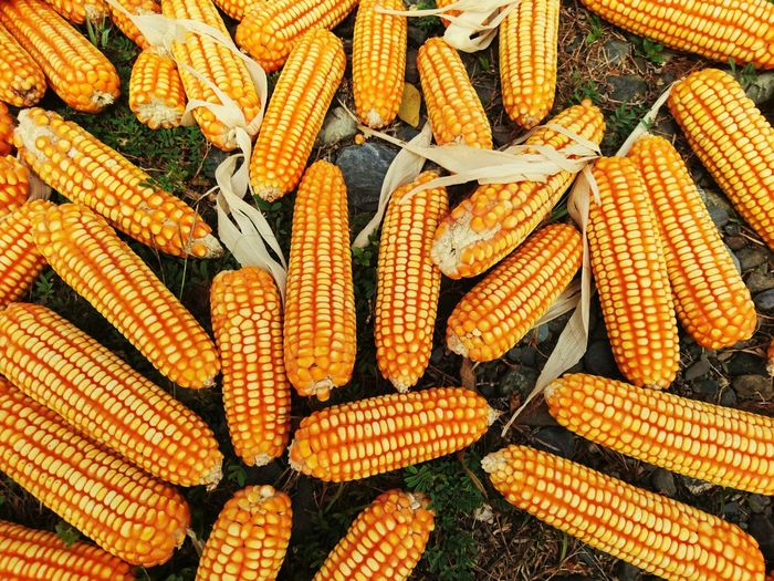 corn Backgrounds Corn Full Frame Cereal Plant Market Corn On The Cob Vegetable Raw Food Close-up Food And Drink Sweetcorn For Sale Display Farmer Market Stall Retail Display Various