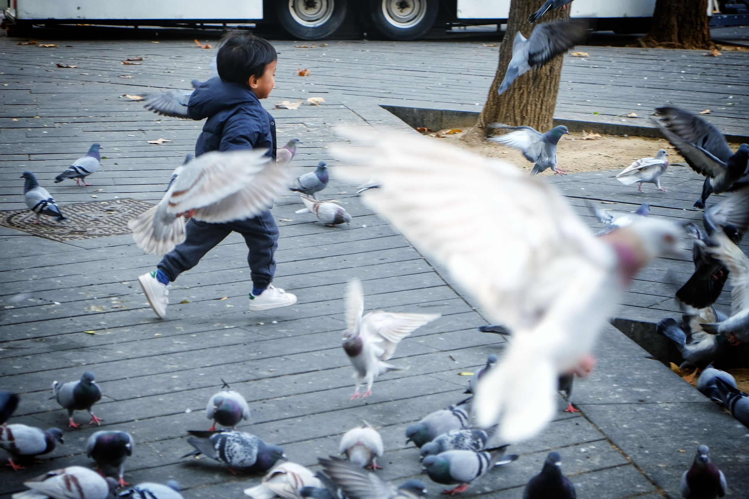 bird, vertebrate, animal wildlife, animals in the wild, group of animals, pigeon, flying, large group of animals, motion, blurred motion, flock of birds, real people, men, day, street, spread wings, leisure activity, feeding, seagull, flapping, paving stone