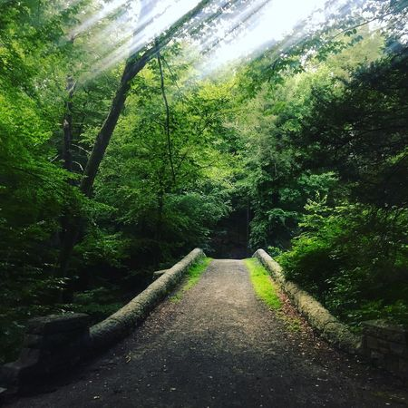 Back into the woods for a run Tree The Way Forward Growth Nature Beauty In Nature Day Tranquility Green Color Tranquil Scene Plant Outdoors No People Lush Foliage Forest Scenics Sky Running Trail Running