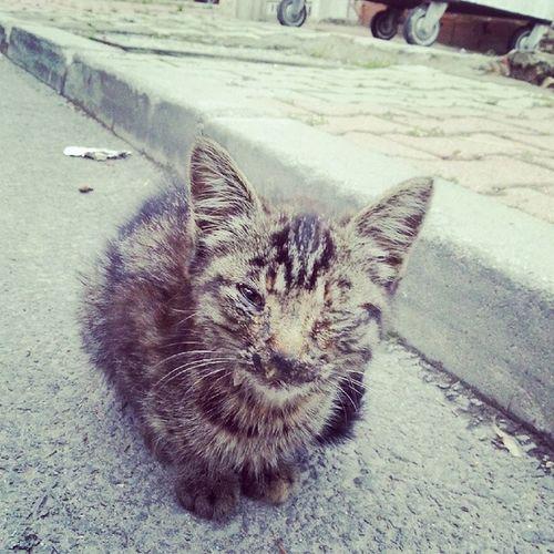 Gözününyarası Kanatır Içimi Kedi