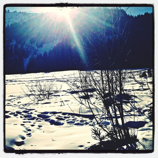Winterwonderland Winter Sun Wonderful Day
