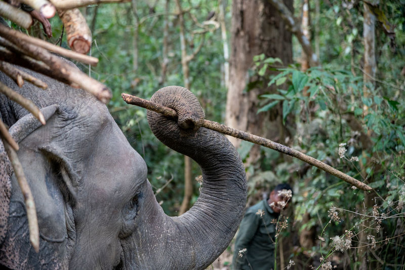 Close-up of elephant in forest