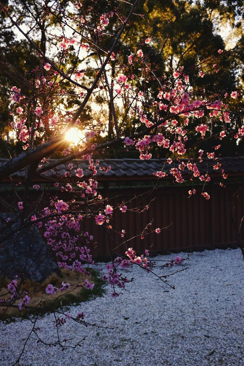 PINK FLOWERING PLANTS AGAINST TREES AND STONE WALL