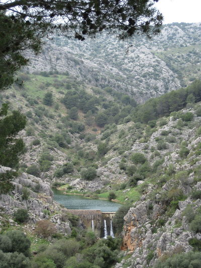Sierra De Las Nieves Tree Plant Mountain Nature Scenics - Nature Architecture Day Beauty In Nature Water No People Hydroelectric Power Built Structure Environment Non-urban Scene Forest Dam Land Bridge Outdoors Bridge - Man Made Structure Flowing Water