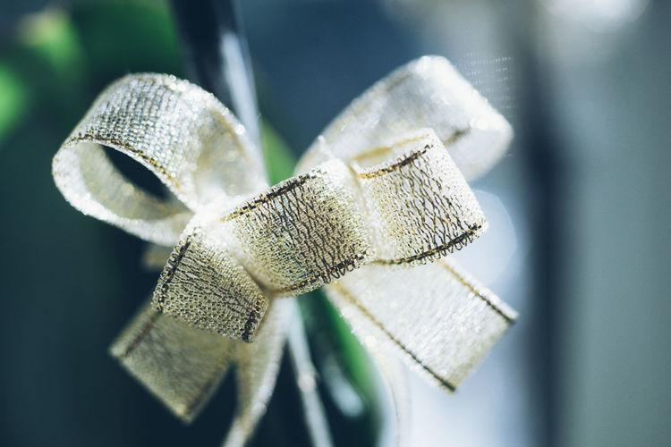 Close-up of tied bow ribbon