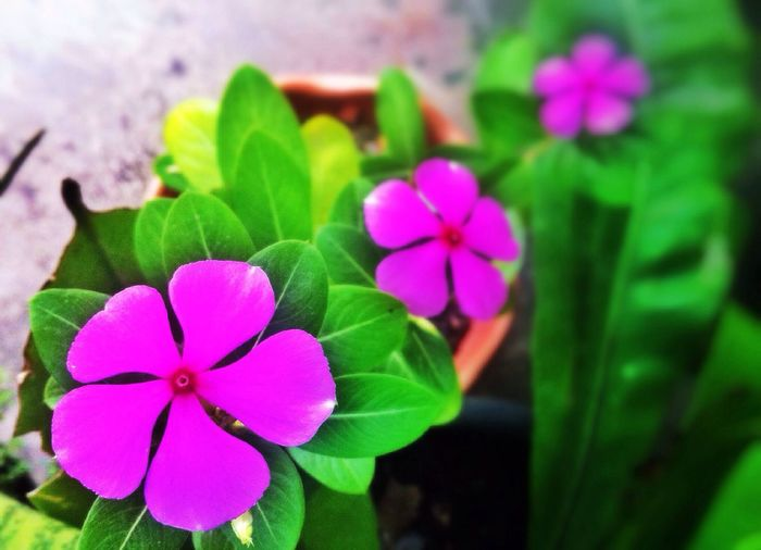 First Eyeem Photo Flowers Likealways Likeforlike PhonePhotography