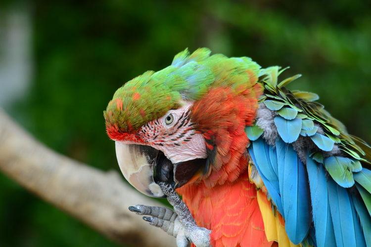 Nature Photography Bird Animal France🇫🇷 Zoo