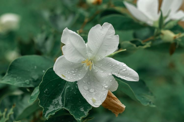 Close-up of raindrops on white flower