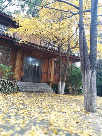 Falling leaves on the trail Tree Architecture No People Building Exterior Outdoors Nature Beauty In Nature
