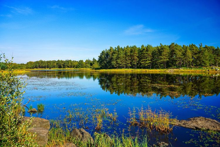 Perspectives On Nature Reflection Tree Lake Water Blue Nature No People Beauty In Nature Outdoors Tranquil Scene Scenics Plant Forest Sky Day Tranquility Growth