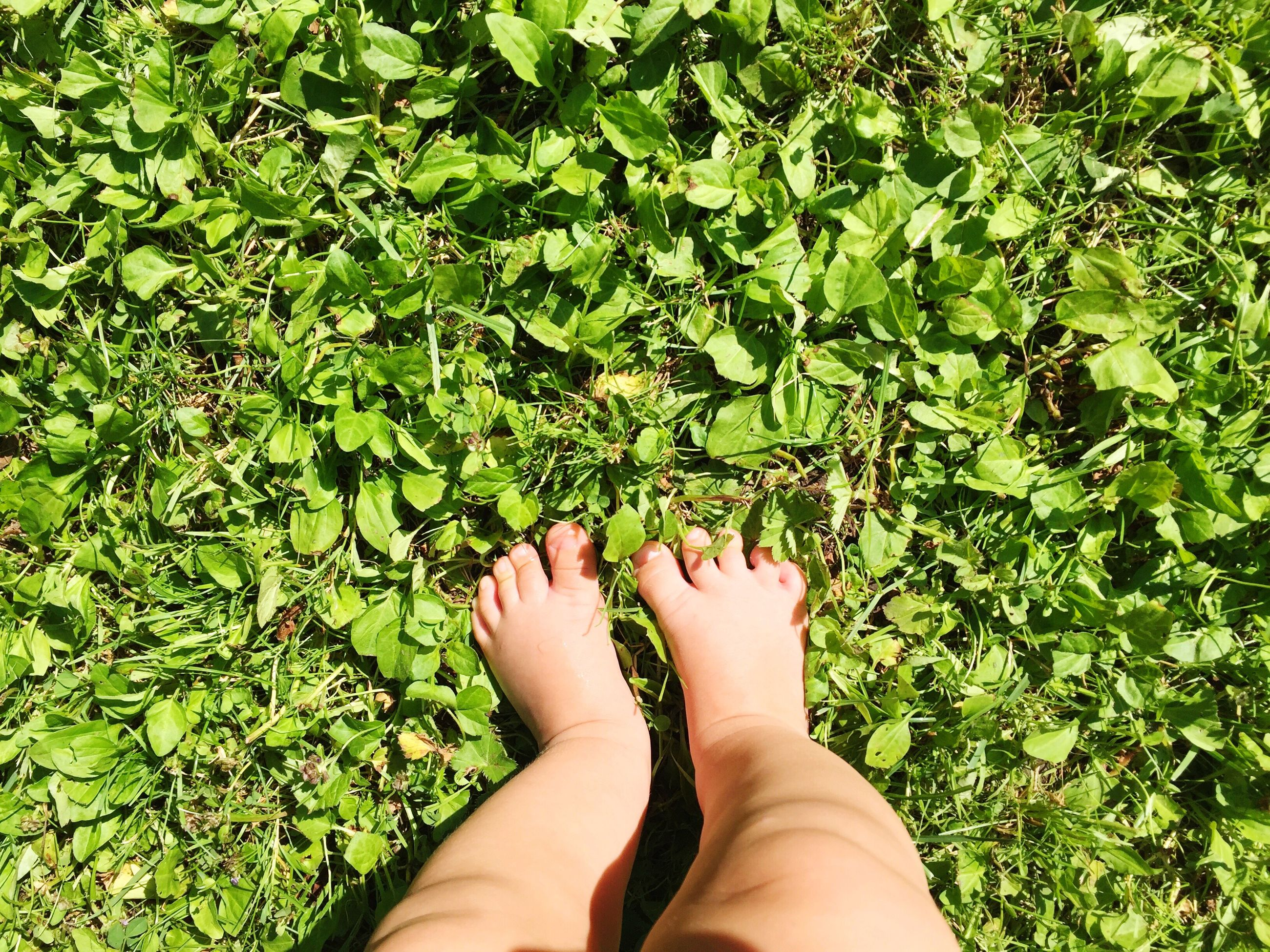 low section, personal perspective, person, green color, grass, human foot, barefoot, part of, lifestyles, growth, plant, leisure activity, unrecognizable person, nature, green, outdoors, day, grassy, cropped, lush foliage, close-up, beauty in nature
