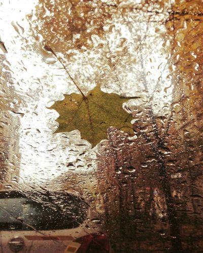 Window Drop Wet