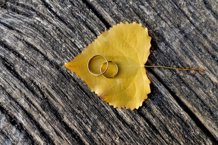 Autumn wedding rings on leaf Wedding Invitation Autumn Wedding Fall Autumn Hochzeit Wedding Rings Wedding Yellow Close-up Still Life Textured  Indoors  Textile No People Jewelry High Angle View Gold Colored Shape Directly Above Wood - Material Ring Personal Accessory