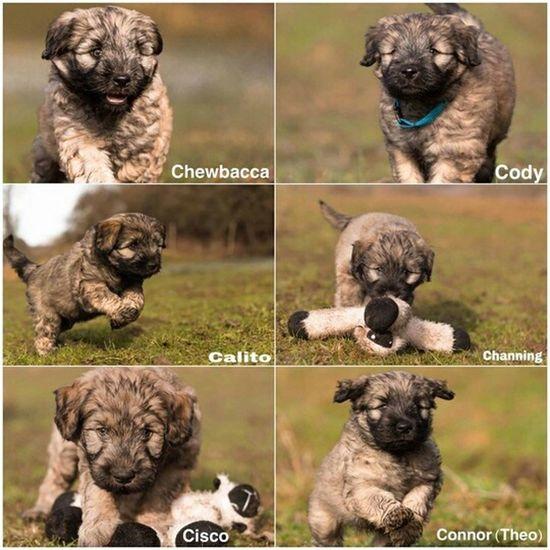 Little boys of Bentjesgosaugustin, Dog Ilovemydog I Love My Dog Mydog Dog Walking Gos D'atura