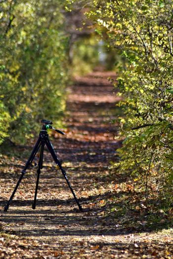 Focus On Foreground Nature Outdoors Day No People Tree Close-up Tripod Tripod At Its Finest Tripod Photography Hiking Trail Hiking View Tree Canopy  The Great Outdoors - 2017 EyeEm Awards