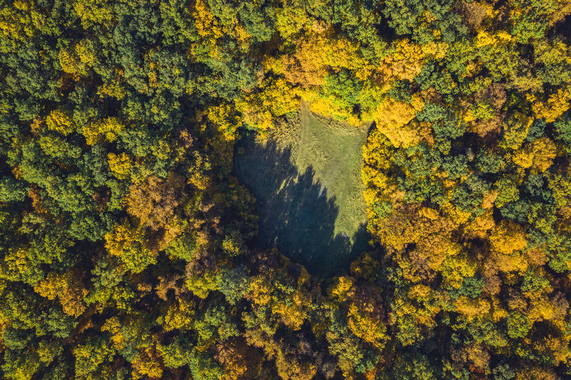 Full frame shot of yellow autumn trees in forest