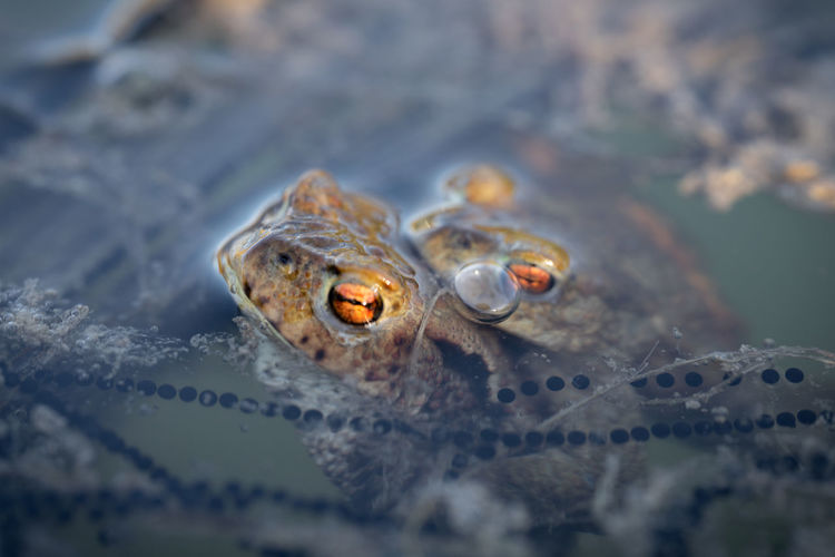 Close-up of two frogs in sea