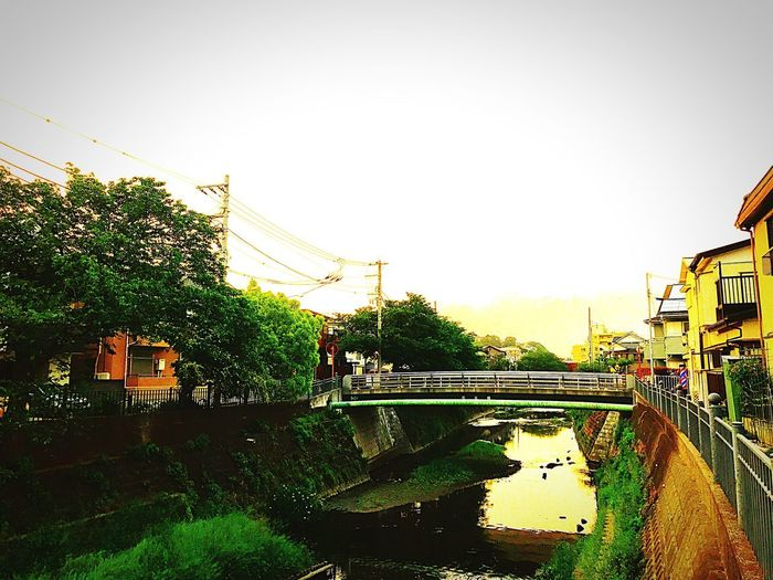 Bridge - Man Made Structure Architecture Built Structure Connection Transportation River Water Car Day Tree Outdoors Footbridge Building Exterior Sky City Clear Sky No People Nature