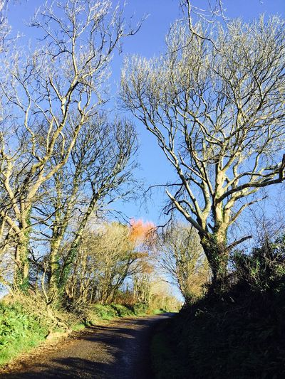 October colours in Ireland 🇮🇪 Octobercolors West Cork Sunny Day October Ireland Nature On Your Doorstep EyeEm Nature Lover Beauty In Nature Eye4photography  Tranquility Countryside Blue Sky