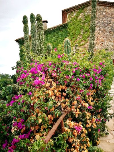 Outdoors Flower Plant Purple Nature Rural Scene Beauty In Nature Discovering Spain Traveling Village Lifestyle Building Exterior Colors Of Nature