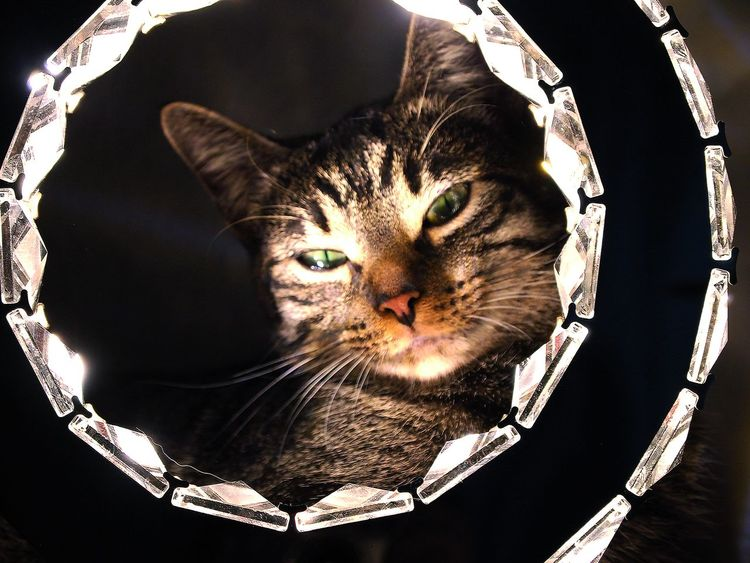 Cats Of EyeEm Cats 🐱 Light Lights Liight Up Your Life Pet Portraits Animal Themes Cat Cat Lovers Cats Cat♡ Close-up Day Domestic Animals Domestic Cat Feline Indoors  Lamp Light And Shadow Light In The Darkness Mammal No People One Animal Pets Whisker