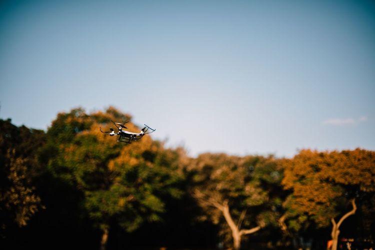 Tilt-shift image of bird flying against clear sky