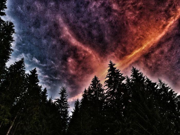 Sonnenuntergang Nature Outdoors Nachdenklich Eyemphotography EyeEmNewHere Likeit Summer Sun Loveit Austria No People Free Happy Tree Milky Way Forest