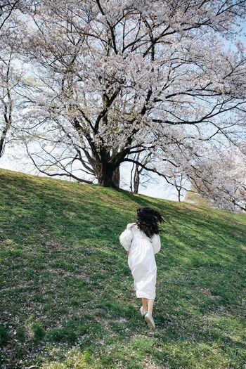 Kasen Running Sakura Sakura Blossom White Dress Long Hair Curly Hair