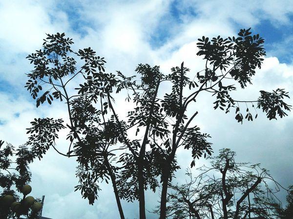 Tree Nature No People Sky Plant Cloud - Sky Outdoors Close-up 12daysofeyeem