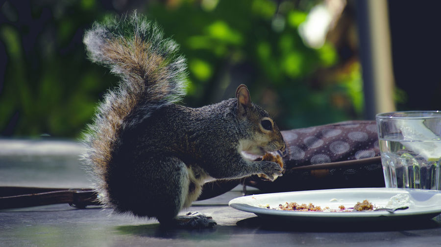 View of a eating food on table