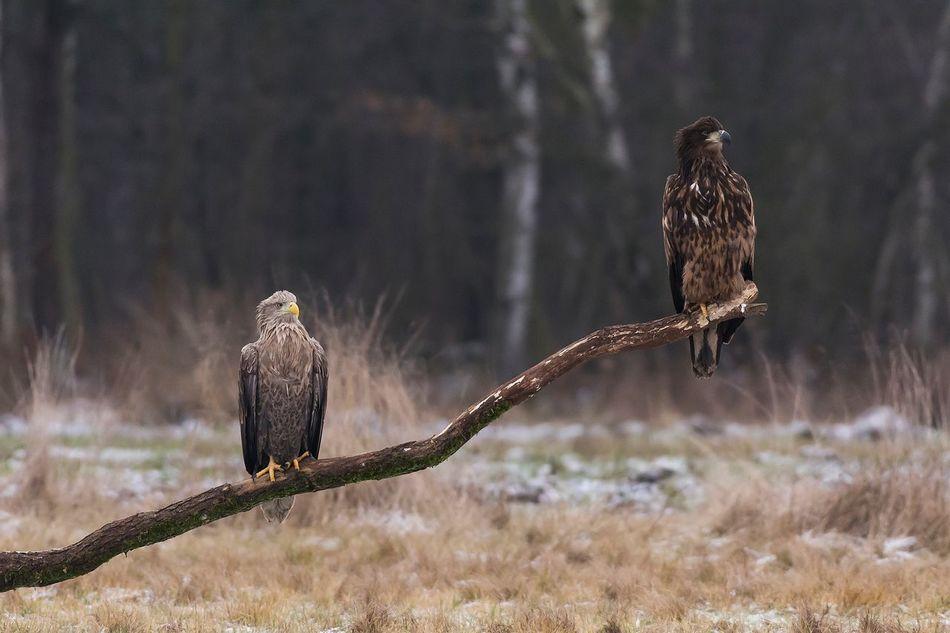 Bird Animals In The Wild Bird Of Prey Animal Themes Animal Wildlife One Animal Perching