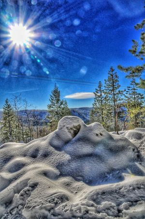 Lens flare and snow Plant Sky Nature Tree Sunlight Land Snow Beauty In Nature Cold Temperature Tranquility Scenics - Nature Day Blue No People Tranquil Scene Outdoors Winter Field Sand Lens Flare