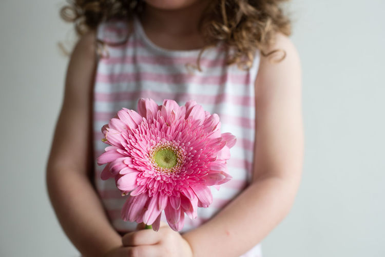 Midsection of girl holding pink gerbera daisy while standing against wall