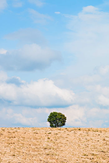 a lonely tree in a field Arid Climate Beauty In Nature Climate Cloud - Sky Day Environment Field Growth Horizon Over Land Land Landscape Nature No People Non-urban Scene Outdoors Plant Remote Scenics - Nature Sky Tranquil Scene Tranquility Tree