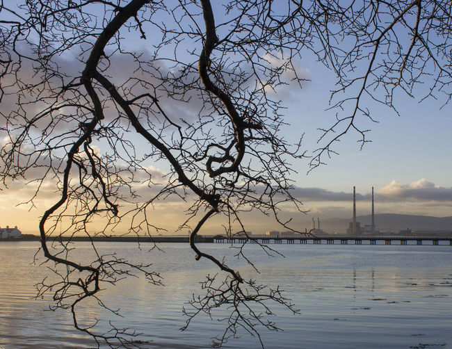 Beauty In Nature Branch Clontarf Ireland Nature No People Outdoors Pigeon House Scenics Sky Tranquility Tree Tree Silhouette