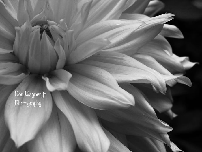 Check This Out Bnw Bnwflower Bnw_collection Bnw_captures Taking Photos Outdoors Southjersey No People Garden Photography Garden Garden Flowers Beautiful Nature Nature Photography Nature_collection Nature On Your Doorstep