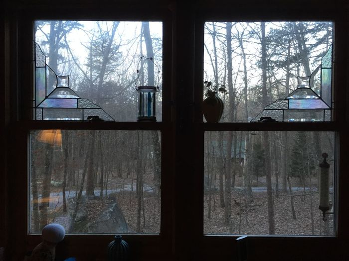 Animal Themes Bare Tree Branch Cold Temperature Curtain Day Forest Glass - Material Indoors  Lifestyles Looking Through Window Nature One Person People Real People Snow Technology Tree Window Winter