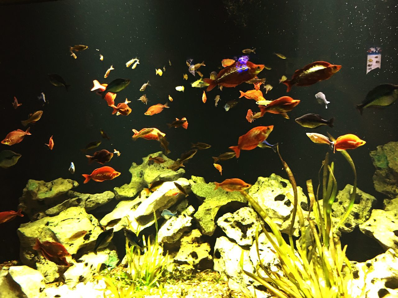 water, nature, swimming, fish, animal themes, large group of animals, animals in the wild, sea life, no people, beauty in nature, plant, leaf, outdoors, day, close-up