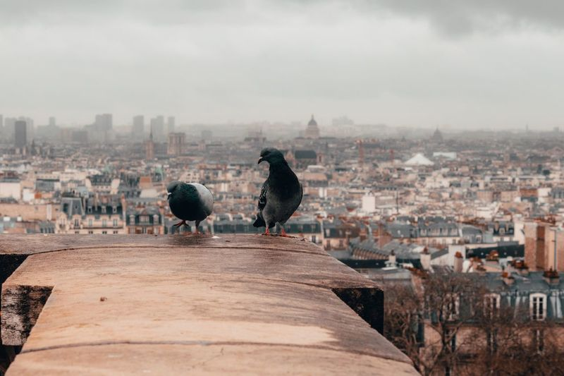 Paris from above EyeEm Selects Architecture Building Exterior Built Structure City Cityscape Bird Travel Destinations Animal Outdoors Cloud - Sky Travel Animals In The Wild Animal Themes Vertebrate Building Nature No People Sky Day Animal Wildlife