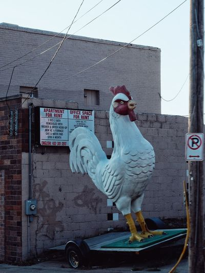 Omaha, Nebraska August 2016 A Day In The Life Art City Cockblock Fuji Humo Life In Motion On The Road Parking Photo Essay Rooster Streetphotography What I Saw