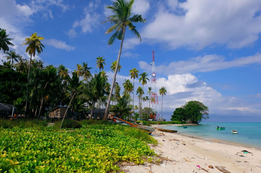 Scenic view of sibuan island sabah malaysia Sibuan Island, Sabah Semporna Sabah Semporna Tree Beach Sand Palm Tree Cloud - Sky Tropical Climate Sea Nature Sky Summer Vacations Water Landscape Travel Destinations Beauty In Nature Scenics Outdoors Tranquility Plant Growth