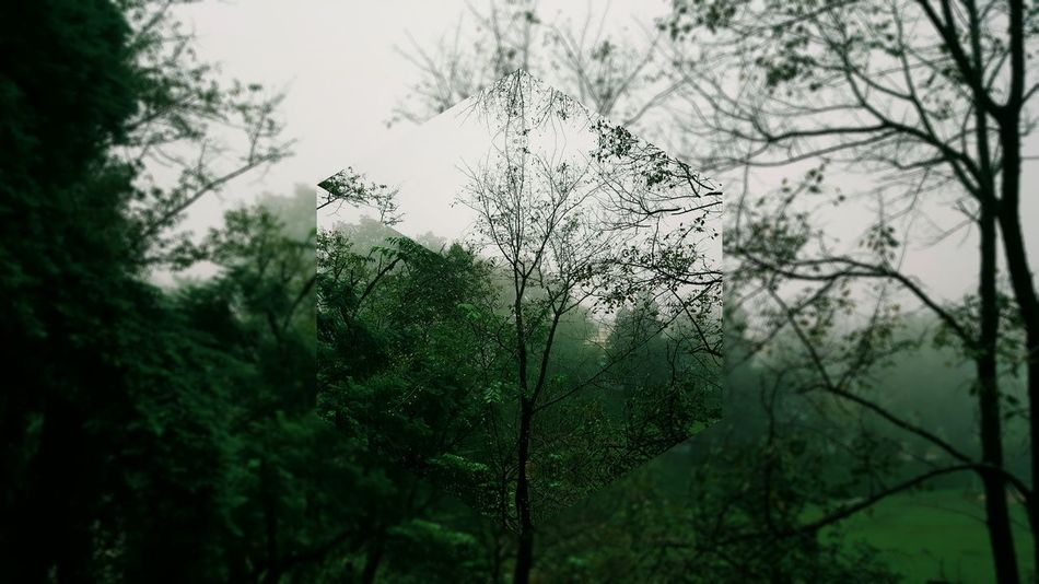 Digitally Enhanced CGI Nature Trees Foggy Trees And Nature Nature Nature Photography Nature_collection Green Trees And Leaves Greenery Fog_collection Foggy Weather Smartphone Photography Smartphonephotography VSCO Vscocam VSCO Cam Vscodaily Shillong DaryllSwer EyeEm Selects