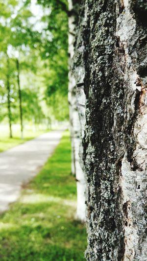 Прекрасный день Прогулка в парке Природа свой_взгляд
