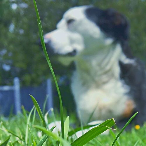 Grass Field One Animal Focus On Foreground Plant Green Color Nature Growth Day Outdoors Pets Close-up
