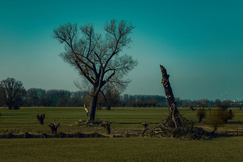 #kaiserswerthmeadows02 Agriculture Bare Tree Beauty In Nature Environment Field Grass Land Landscape Nature No People Outdoors Plant Rural Scene Scenics - Nature Sky Tranquil Scene Tranquility Tree