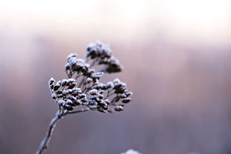 Winter Winter Wonderland January Wintermood Wintertime Beautiful Nature Cold Weather Nature Photography Cold Day Winter_collection Nature_collection Cold Temperature Beauty In Nature Winter Day Naturephotography Cold Days Nature Beauty Of Nature