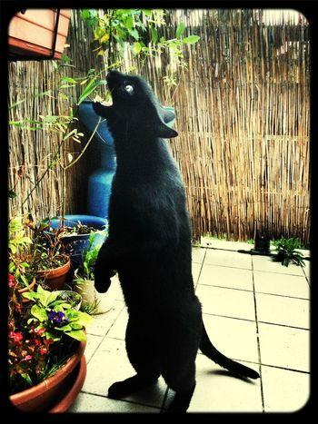Show Me Your Kitty Cat Black Cat Cat Katzen